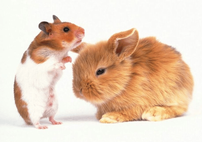 Provide Loving Care Guineau Pigs and Rabbit