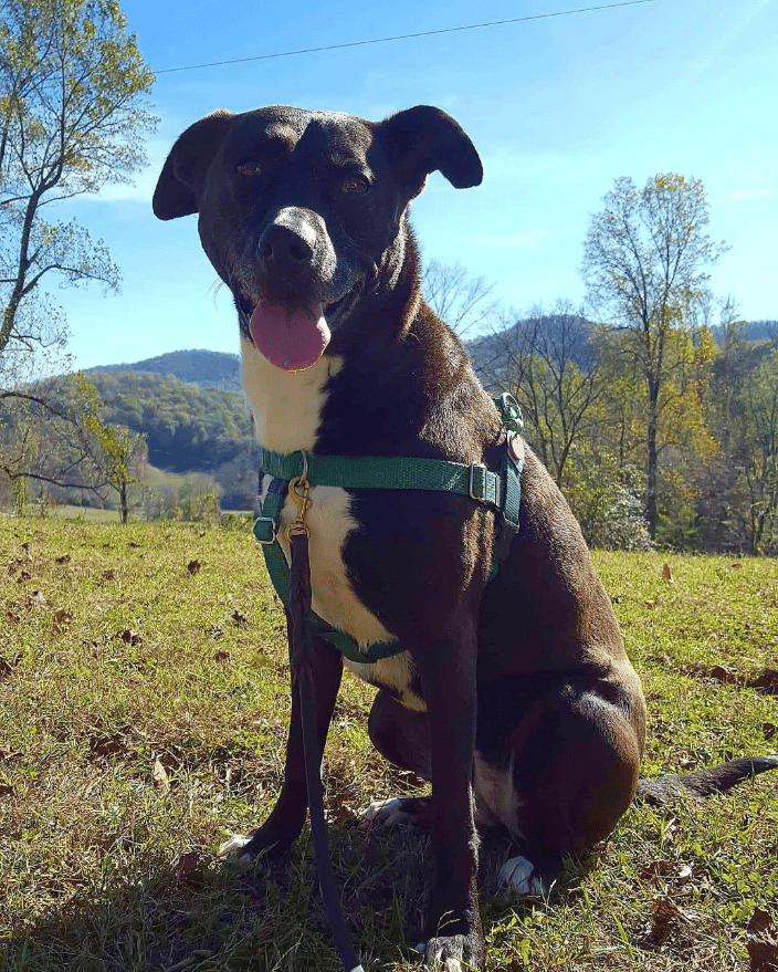 Dog performing sit stay during hike